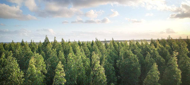 Protegiendo los bosques: Certificaciones FSC®