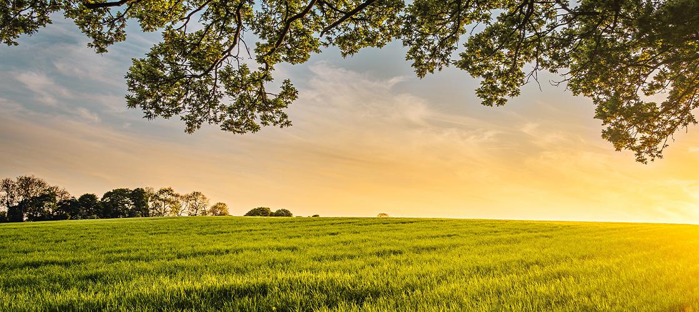 Trabajamos para garantizar una cadena de producción responsable con el medio ambiente